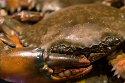 家庭燒烤時爬來50多只大螃蟹-攝圖網