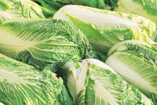 韓國大白菜漲價至62元一棵-攝圖網