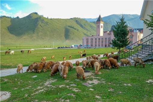 新疆高校食堂大叔校園里追羊-攝圖網