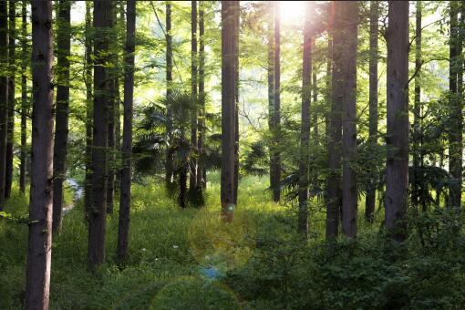 有林权证了就是合法的吗-摄图网