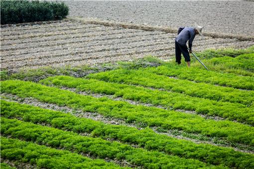 農業-攝圖網