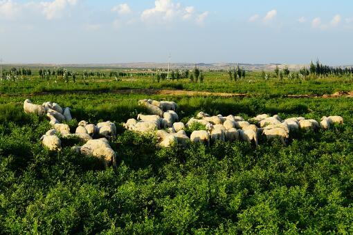 畜牧業扶持政策-攝圖網