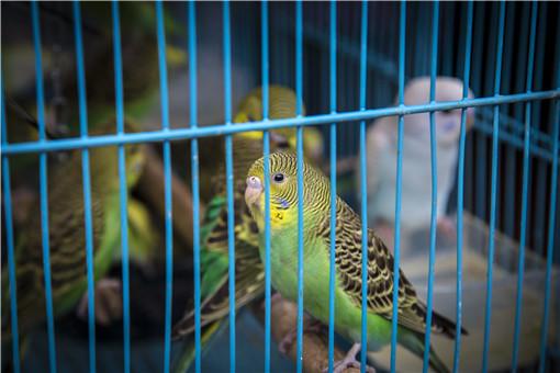 鹦鹉-摄图网