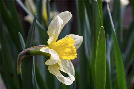 兰花什么季节开花图片图片