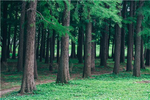 植树节:为什么植树是公民义务 具体事件详情是怎样的?