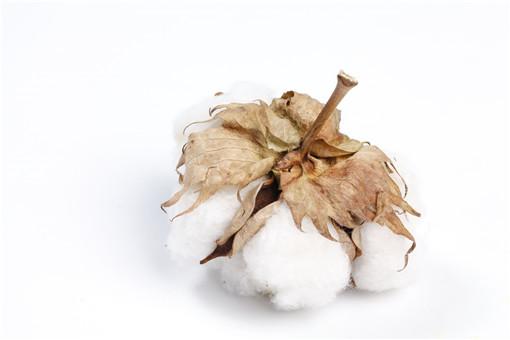 新疆棉花-攝圖網