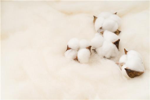 新疆棉花種植時間和收獲時間-攝圖網