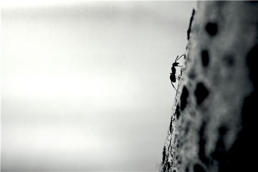 紅螞蟻咬了紅腫癢怎么辦-攝圖網