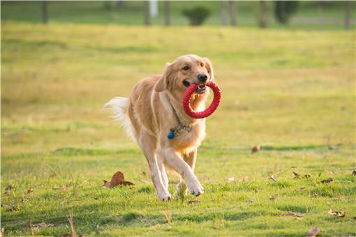 警校售淘汰犬最高拍出33萬-攝圖網