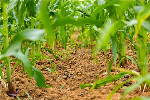 湖南省耕地多少錢一畝-攝圖網