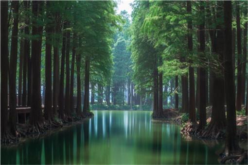 江西省林地多少錢一畝-攝圖網