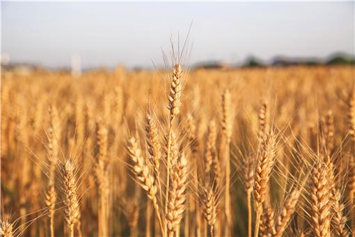 2021年農民豐收節是哪天-攝圖網
