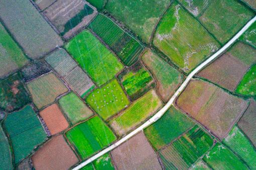 農田-攝圖網