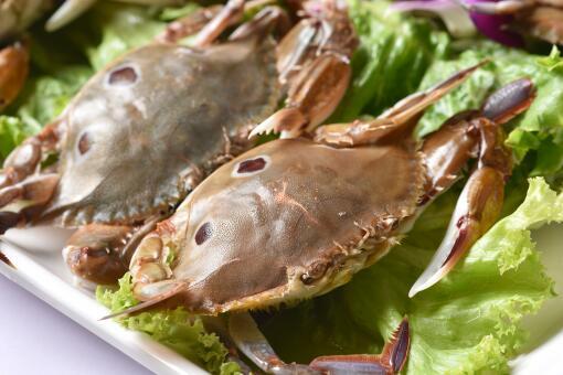 梭子蟹價格最新行情-攝圖網