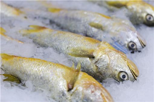 2021黃花魚價格-攝圖網