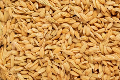 现在水稻价格是多少钱一斤-摄图网