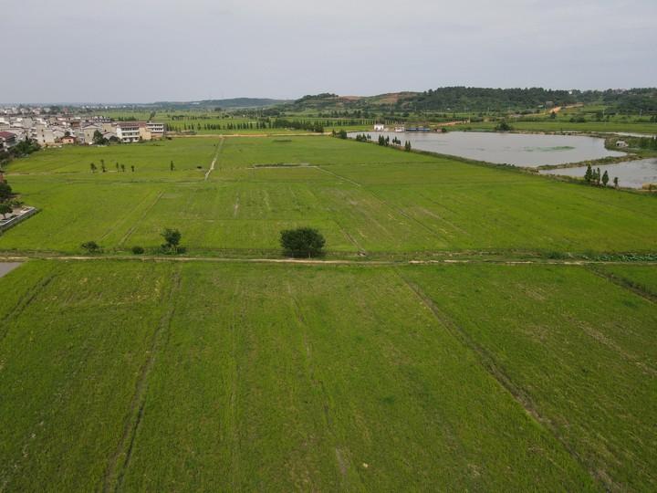 姚圩镇有3000亩耕地