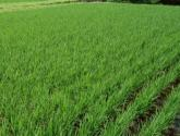 海南省針對三農問題有什么新的舉措