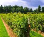 貴州以供給側改革裂變助推農業轉型升級
