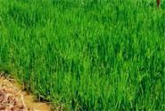 綠色高產高效——引領農業轉型升級
