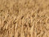 糧食直補是歸土地承包者還是實際種植者?