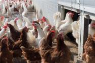 在农村办个养殖合作社要哪些手续?如何注册?