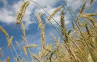 2018年糧食直補什么時候發?為什么有的農民拿不到?