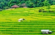 土地流转推行后 5年内农村做什么项目有前景?