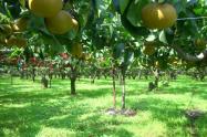通过土地流转做水果树种植,国家政府有补贴和扶持吗?