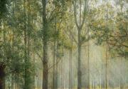 襄陽市集體林地經營權流轉證登記發證管理辦法