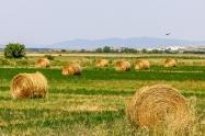 土地流转总体趋势向好,各地流转价格上升明显,一般每亩多少钱?