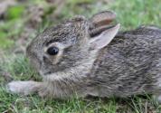 现在特种养殖什么赚钱?野兔、野猪、山鸡、地鳖怎么样?政府有补贴吗?需要哪些手续?