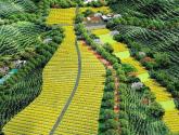 農業農村部關于開展休閑農業和鄉村旅游升級行動的通知