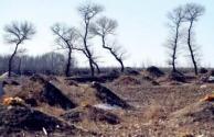 农村耕地可以买卖吗?占用耕地修建坟墓合法吗?