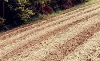 农村五保户死后,宅基地和承包地怎么办?村集体可以收回吗?