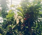 今年去农村承包土地需要什么条件?用来种樱桃能赚钱吗?