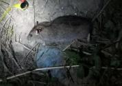 家中灭鼠,老鼠不吃毒饵怎么办?灭鼠有什么好办法?
