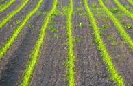 广西出台耕地保护责任目标考核办法:每5年为一个考核周期,奖惩并重!