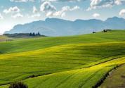 """苍南县出台""""设施蔬菜-水稻""""水旱轮作扶持政策:10亩以上的农户,每亩补助200元"""