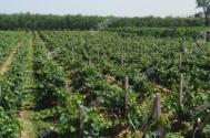 【土地流轉致富案例】農村土地流轉能給農民帶來什么好處?如何實現脫貧致富?