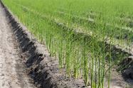 2018年耕地占用税最新规定:草案提请审议 规定四类情形减免