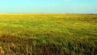 2018年黑龙江征用使用草原许可办理政策如何?有哪些条件和资料要求?
