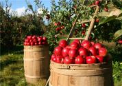 鄉村產業振興:小農生產引入現代農業發展,農民生活邁入新階段
