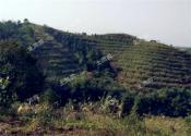 注意:下一个土地承包期到来,这五类农民可能失去土地!