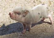 農業農村部:嚴查泔水養豬!江蘇省已執行并處以罰款,看看有你的省份嗎?