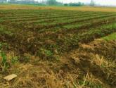 如何辨别土壤类型和肥力?不同种类的土壤怎么施肥?