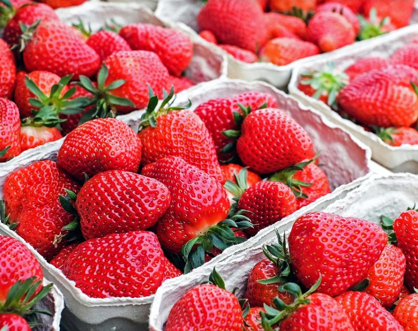 盆栽草莓如何种植?几月种比较好?不开花怎么办?