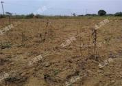 土地承包法再次修正!承包权限发生变动,草地、林地承包期届满拟延长30年