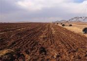 農村集體土地轉讓協議書怎么寫?范本是怎樣的?