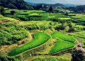 山西省2018农村农林文旅康产业融合发展建设项目方案(附补助标准)